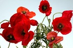 10 Quotations About Remembrance by Jessica Barrah